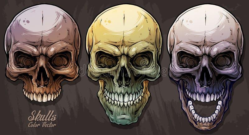 Grupo humano colorido gráfico detalhado dos crânios ilustração royalty free