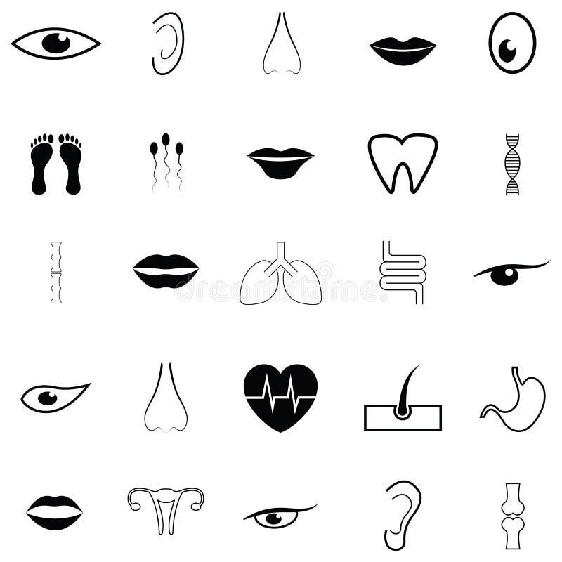 Grupo humano do ícone da anatomia ilustração do vetor