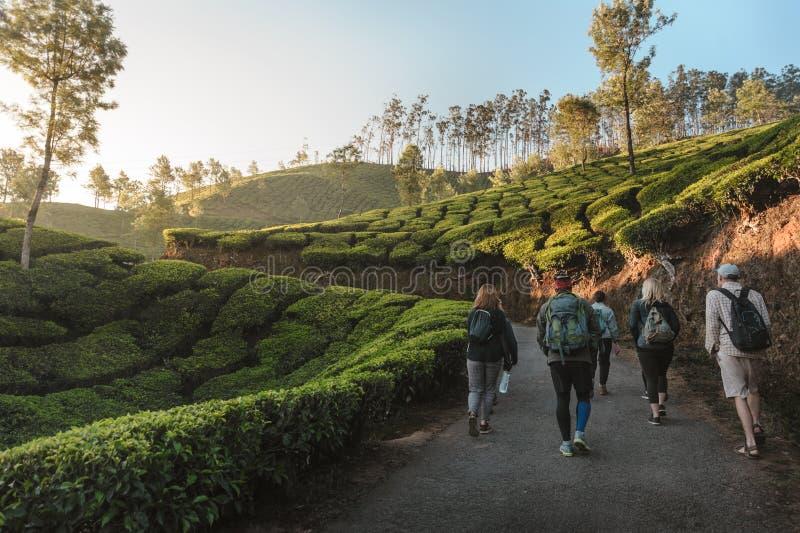 Grupo internacional de viajantes com as trouxas que vão pela fuga através das plantações de chá no nascer do sol fotografia de stock