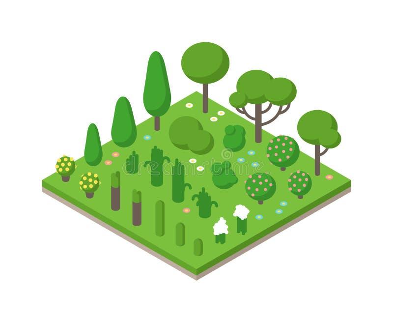 Grupo isométrico da árvore do verde do vetor na ilustração do fundo do campo ilustração royalty free
