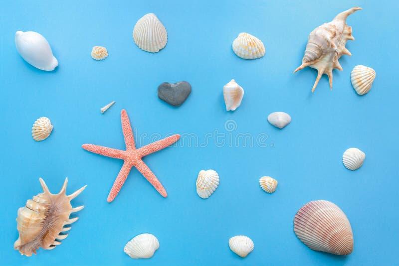 Grupo liso da configuração de shell do mar de tamanhos diferentes em um fundo azul pastel brilhante imagem de stock