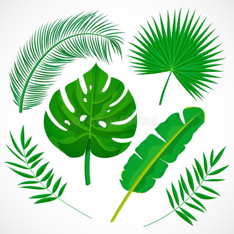 Grupo liso das folhas de palmeira Cole??o dos ?cones das plantas tropicais Banana, monstera, palmetto, folha do coco isolada no f ilustração stock