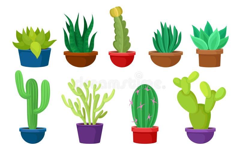 Grupo liso do vectoe de cactos diferentes em uns potenciômetros cerâmicos coloridos Plantas do Succulent Elementos da natureza pa ilustração royalty free