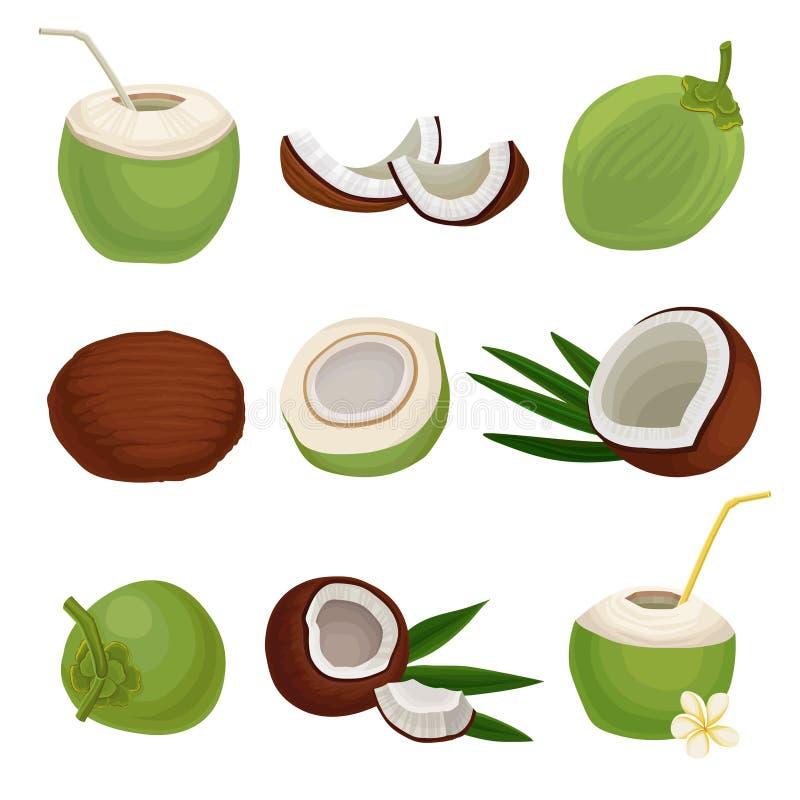 Grupo liso do vetor de cocos frescos Cocktail exótico Alimento natural e saudável Fruta tropical Elementos para o produto ilustração stock