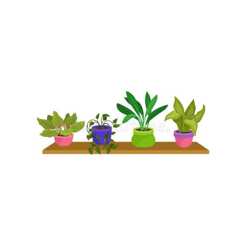 Grupo liso do vetor de 4 houseplants em uns potenciômetros cerâmicos coloridos Plantas decorativas verdes bonitos na prateleira d ilustração do vetor