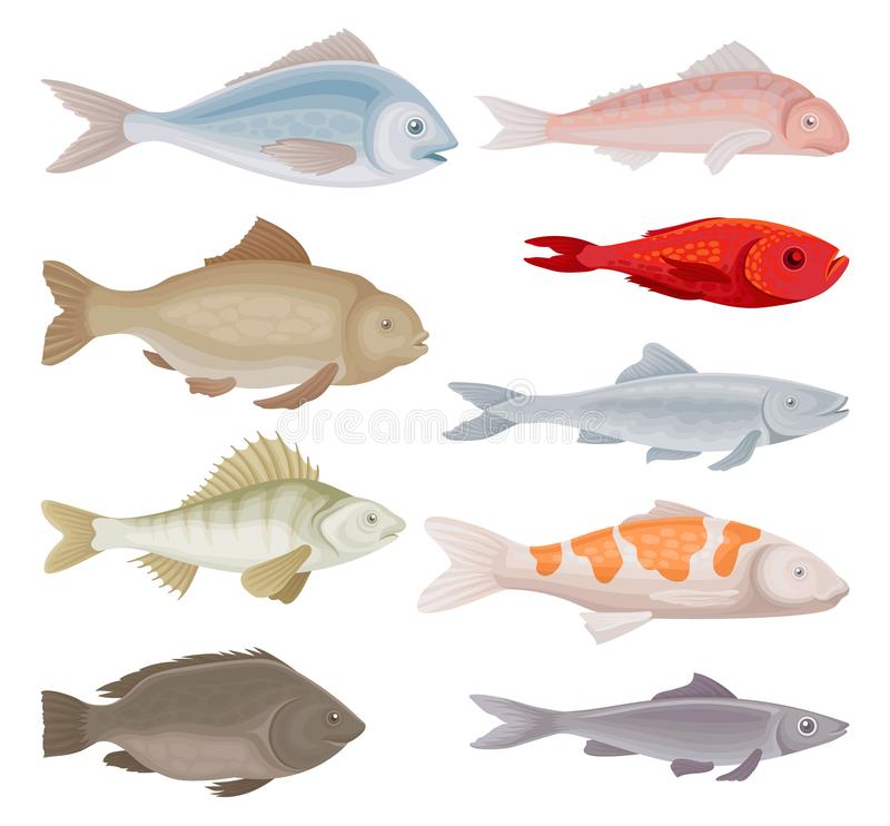 Grupo liso do vetor de tipos diferentes dos peixes Aquário e animais marinhos com aletas Criaturas do mar ilustração do vetor