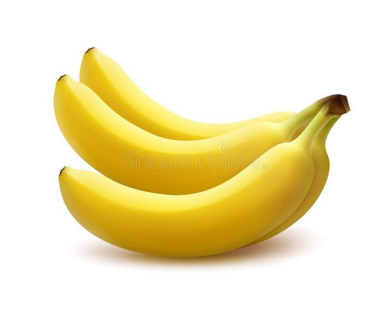 grupo maduro da banana ilustração stock