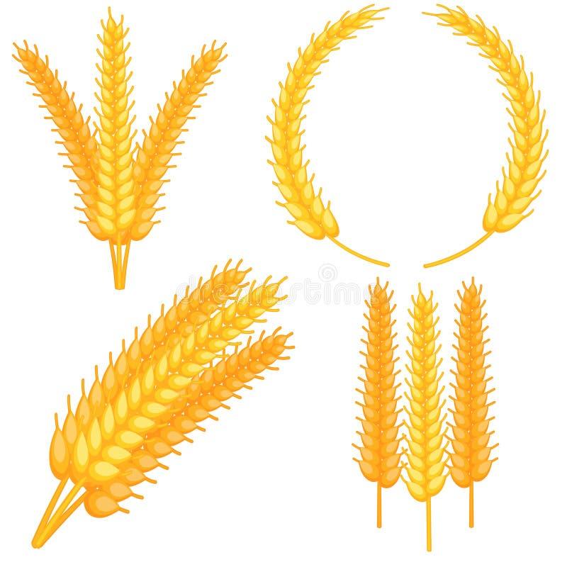 Grupo maduro da orelha do trigo dos desenhos animados coloridos ilustração royalty free