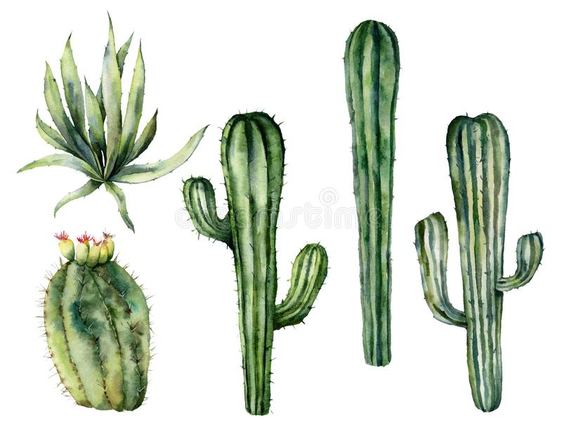 Grupo mexicano dos cactos da aquarela Coleção floral pintado à mão com cactos do deserto, agava Ilustra??o bot?nica isolada ilustração do vetor