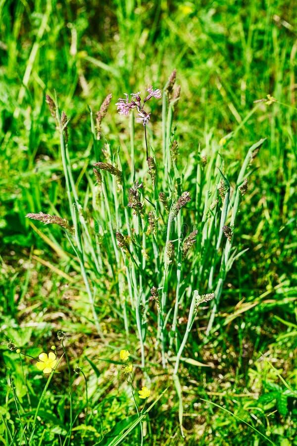 Grupo novo de grama em um prado da mola imagem de stock