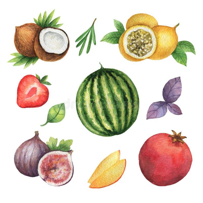 Grupo orgânico da aquarela de frutos e de ervas isolados no fundo branco ilustração royalty free