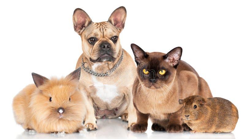 Grupo pequeno de animais de estimação fotos de stock