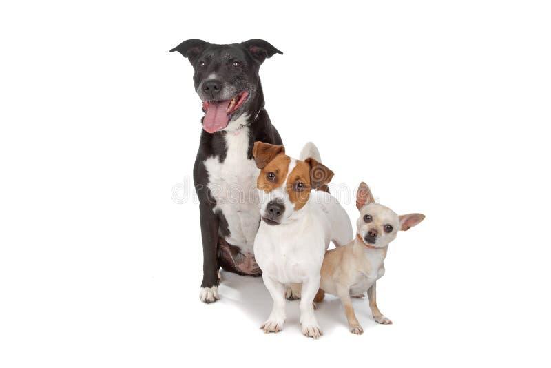 Grupo pequeno de cães fotografia de stock