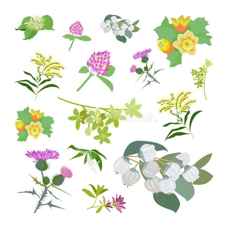 Grupo planty do mel ilustração stock