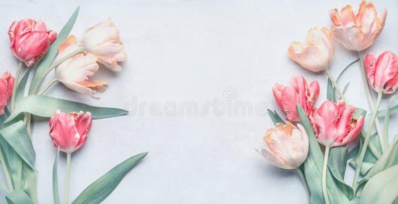 Grupo por feriados da primavera, zombaria das tulipas da cor pastel do cartão acima, natureza da mola fotografia de stock royalty free