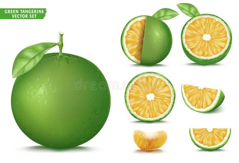 Grupo realístico maduro alaranjado ácido do alimento do vetor 3D do fruto da tangerina verde ilustração royalty free