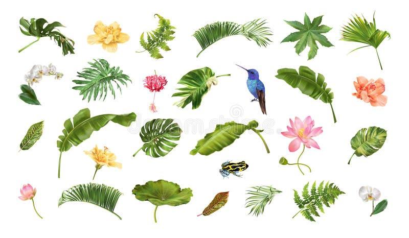 Grupo realístico tropical dos animais e das flores das plantas ilustração royalty free
