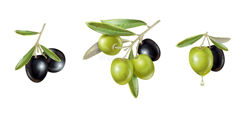 Grupo realístico verde-oliva ilustração royalty free