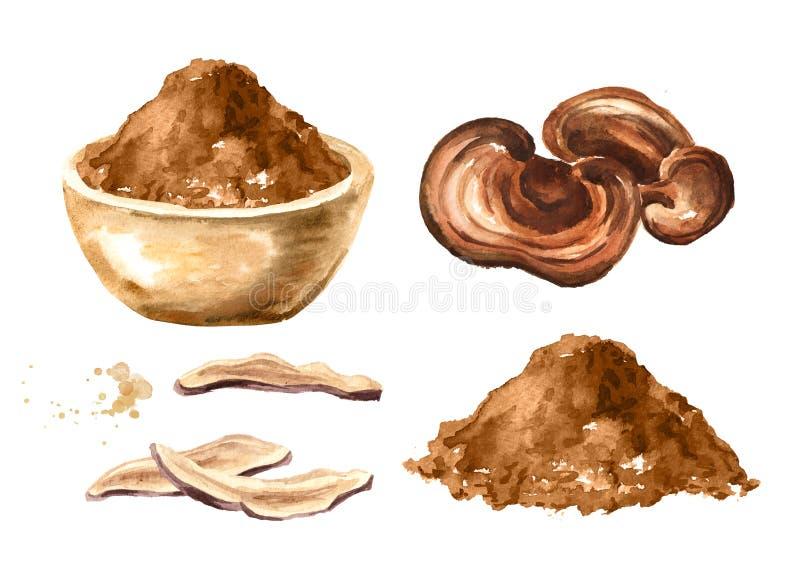 Grupo secado do pó do cogumelo do lucidum do ganoderma de Reishi Superfood Ilustração tirada mão da aquarela, isolada no fundo br ilustração stock