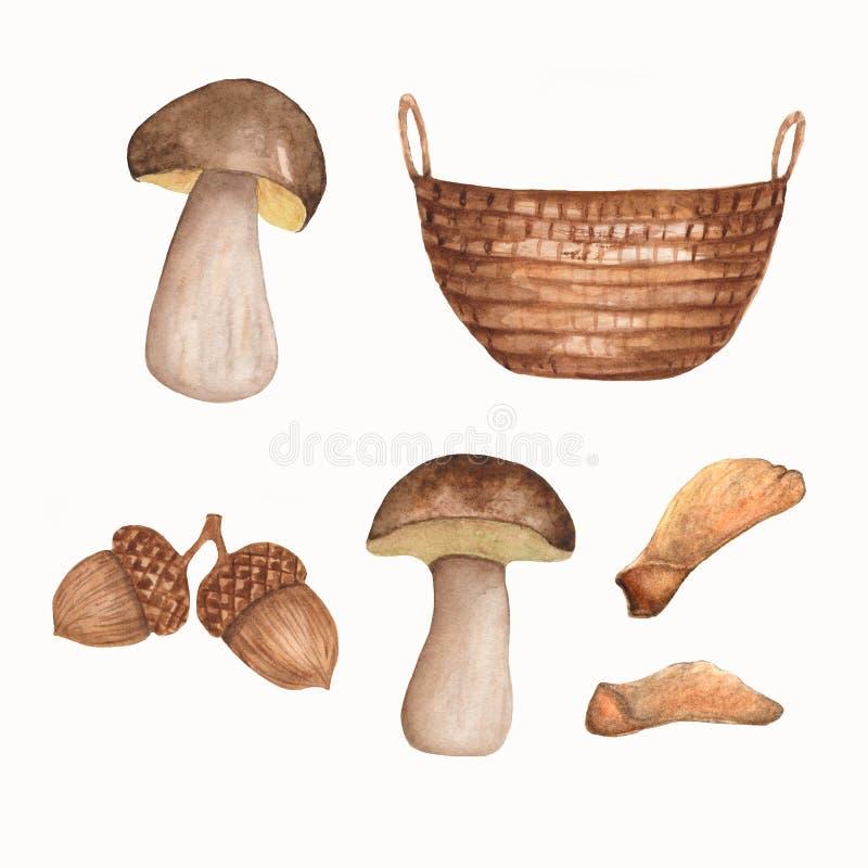 Grupo tirado mão da aquarela de elementos do outono Cesta de Brown, cogumelos, bolotas, sementes do bordo isoladas no fundo branc ilustração stock
