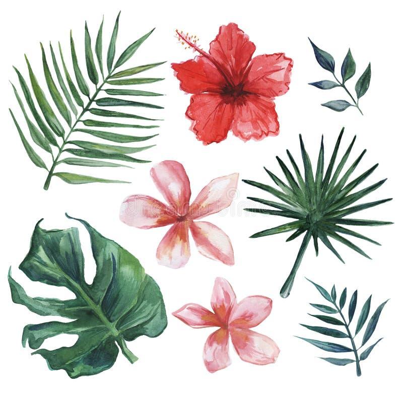 Grupo tirado mão da aquarela de folhas e de flores tropicais ilustração do vetor