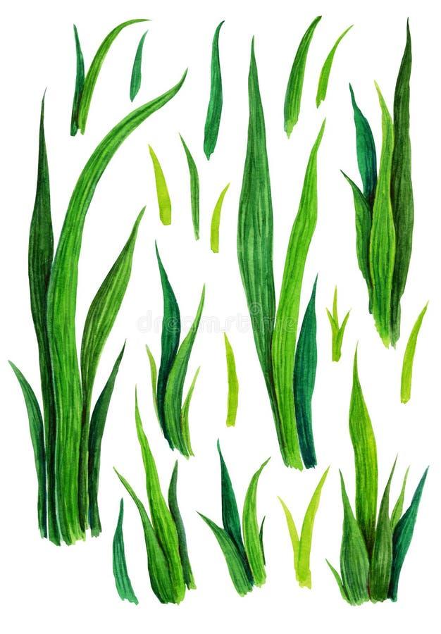 Grupo tirado mão da grama da aquarela isolado no fundo branco Verde-forragem do esboço Teste padrão da grama verde Erva abstrata ilustração stock