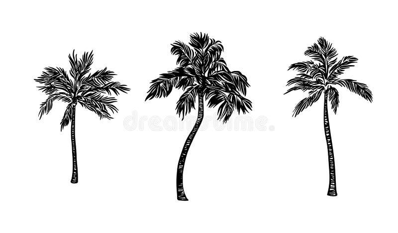 Grupo tirado m?o da palmeira Desenho de tinta preta do vetor isolado no fundo branco Ilustra??o gr?fica ilustração do vetor