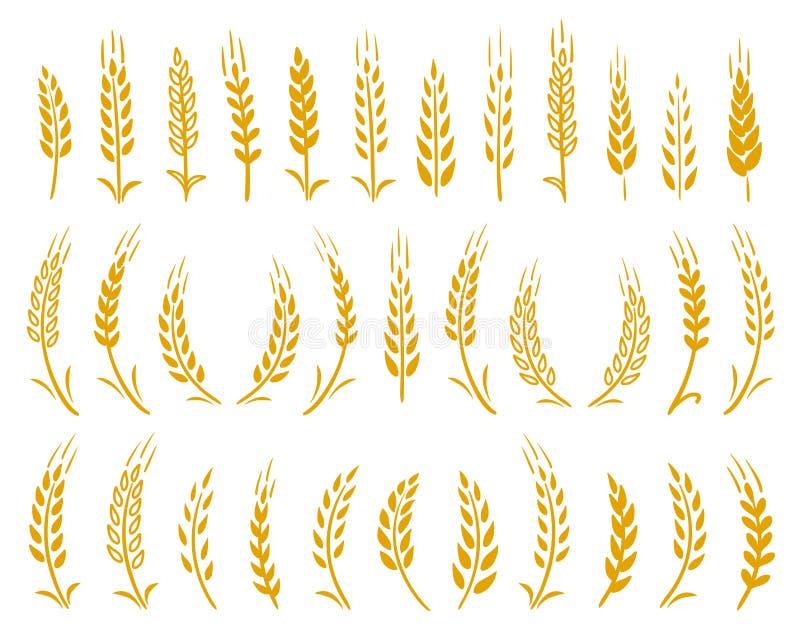Grupo tirado mão de ícones amarelos das orelhas do trigo ilustração stock