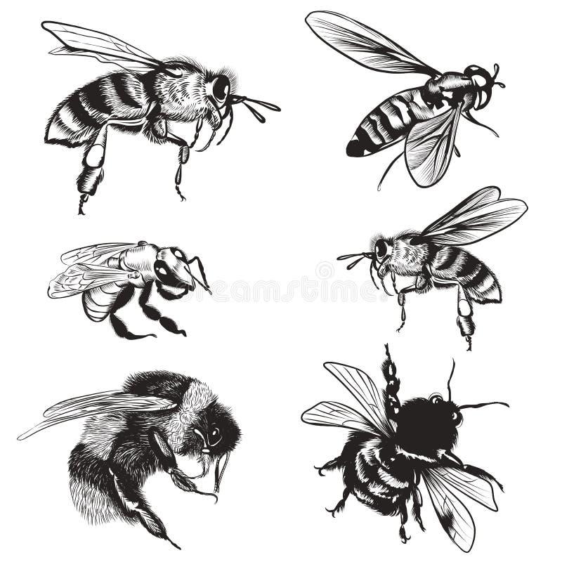 Grupo tirado mão de abelhas, zangão do vetor, insetos detalhados altos para o projeto ilustração royalty free