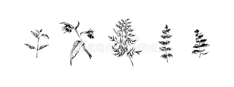 Desenho Estilizado Da Pena Das Flores E Das Folhas