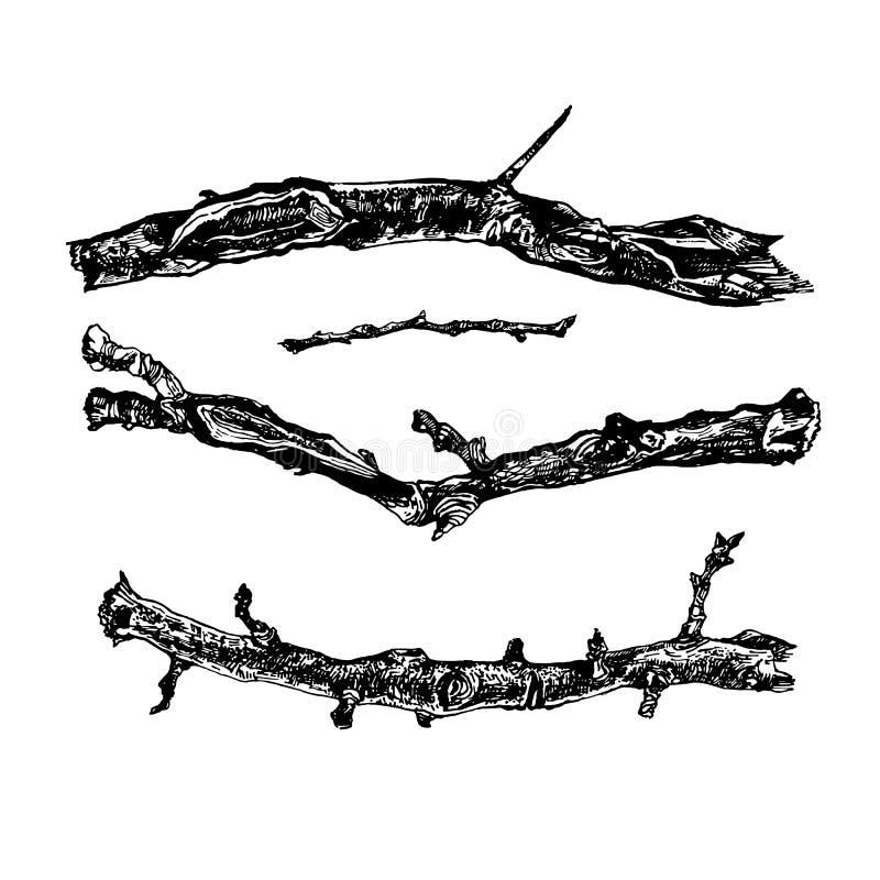 Grupo tirado mão de ramos de árvore ilustração do vetor