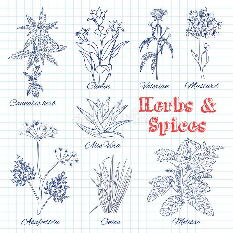 Grupo tirado mão do vetor com ervas e especiarias ilustração royalty free