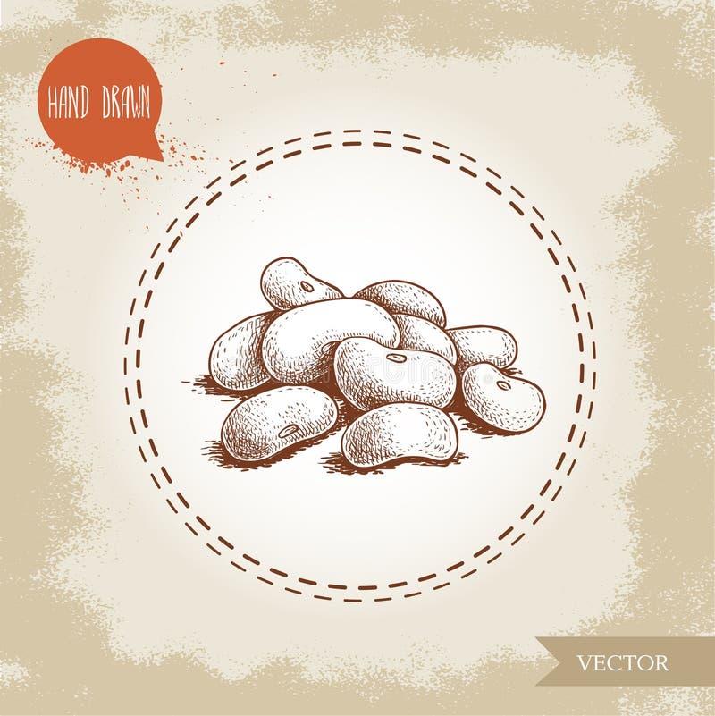 Grupo tirado mão dos feijões brancos do estilo do esboço Vector a ilustração do alimento da dieta saudável isolado no fundo de vi ilustração stock