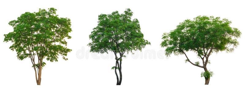 Grupo tropical da coleção da árvore isolado no branco imagens de stock royalty free