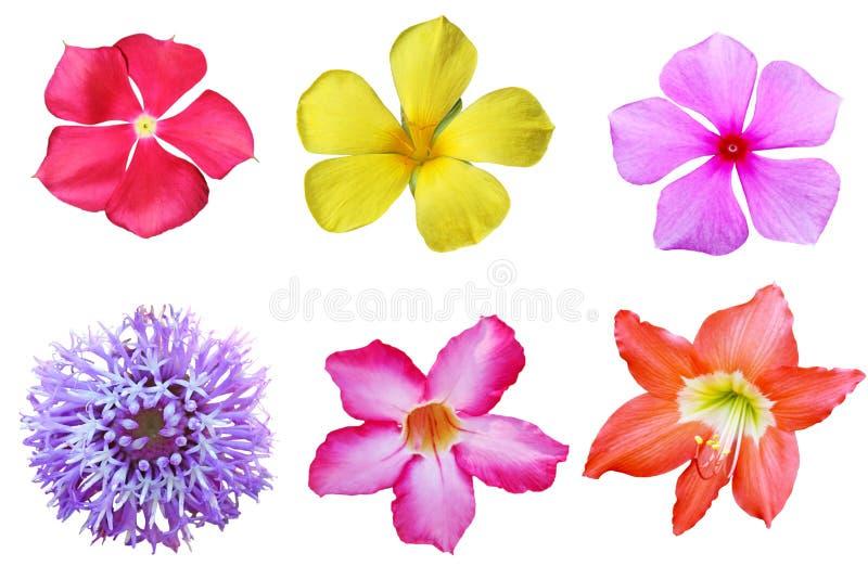 Grupo tropical da flor imagens de stock royalty free