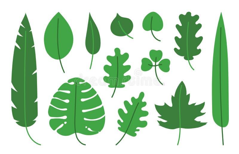 Grupo tropical Ilustração tirada mão da folha do vetor Folhas do bordo, do vidoeiro, do monstera, da banana, da palma, do chá, do ilustração do vetor