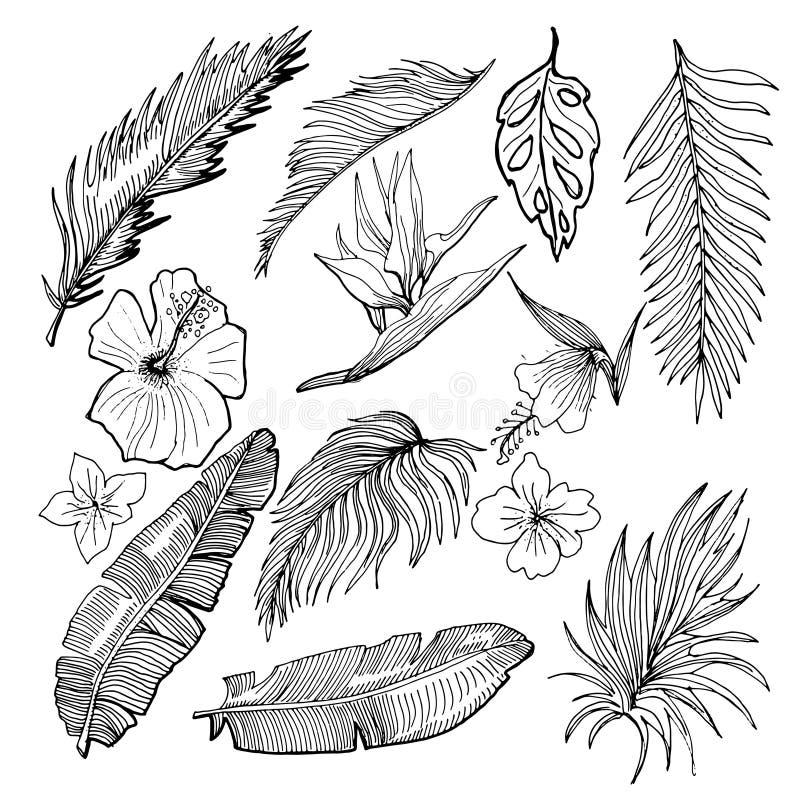 Grupo tropical tirado mão do vetor Banana e folhas de palmeira e Tropi ilustração stock