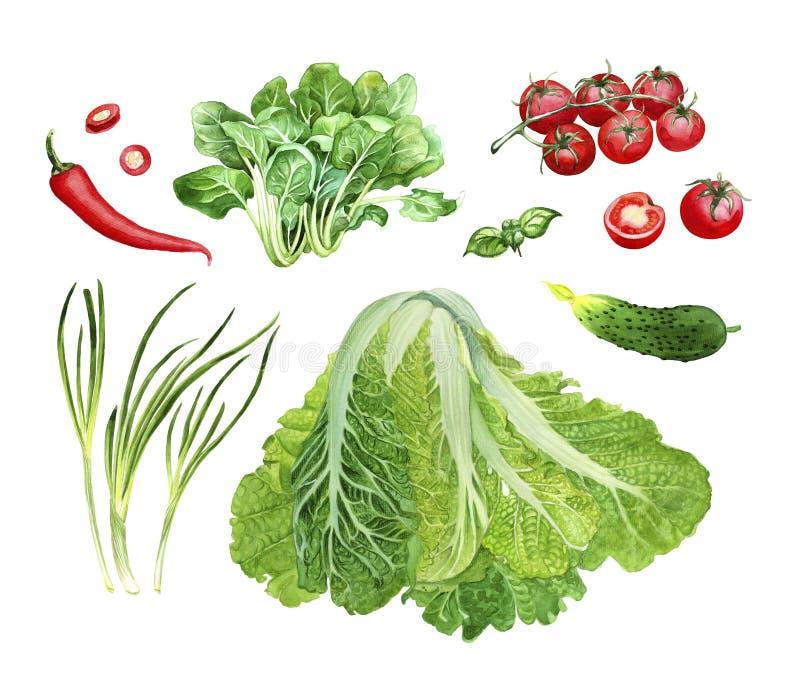 Grupo vegetal da aquarela ilustração stock