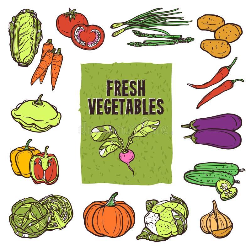 Grupo vegetal do esboço ilustração royalty free