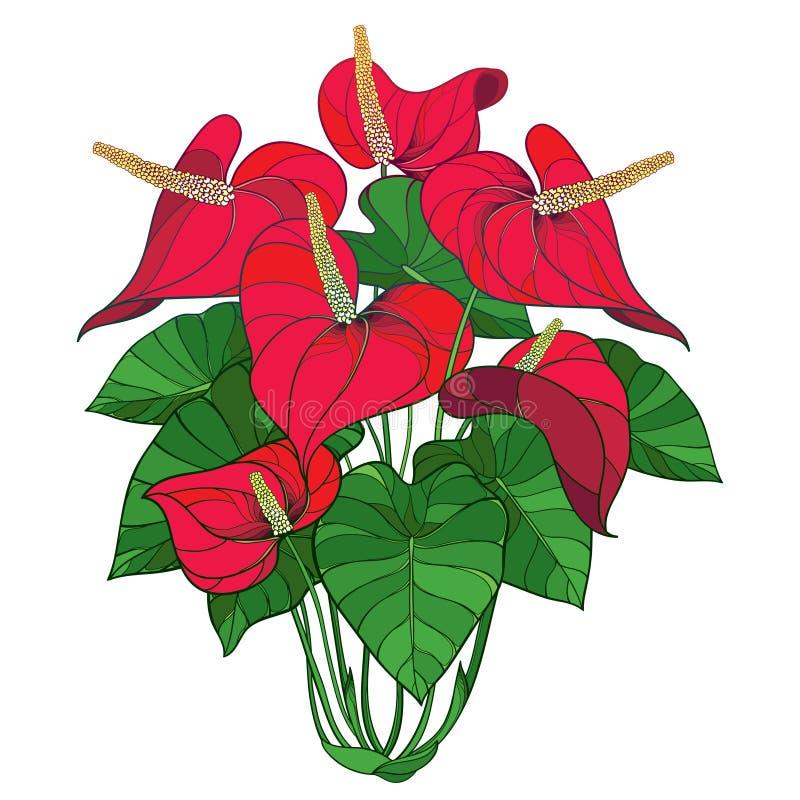 Grupo vermelho da flor do antúrio ou do Anturium da planta tropical do esboço do vetor e folhas verdes isolados no fundo branco ilustração do vetor