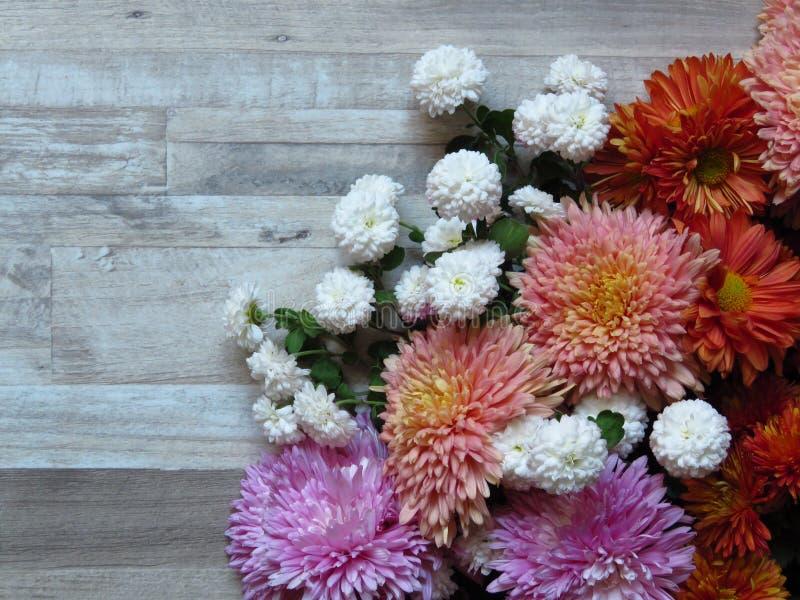 Grupo vibrante diverso do crisântemo das cores no fundo descorado da madeira de carvalho Branco, amarelo, laranja, rosa, crisânte imagem de stock royalty free
