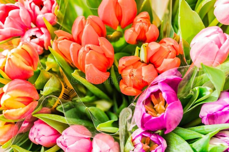 Grupos coloridos das tulipas, vista superior, close-up fotografia de stock