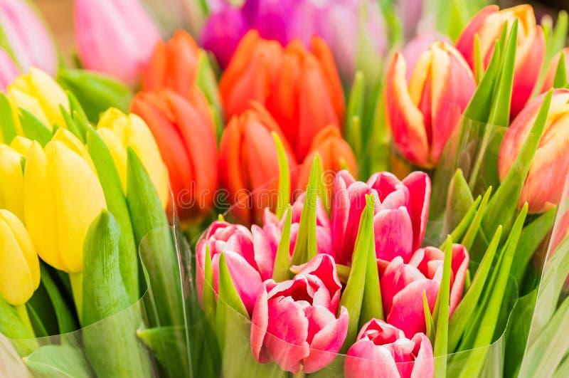 Grupos coloridos de flores da mola das tulipas imagens de stock royalty free