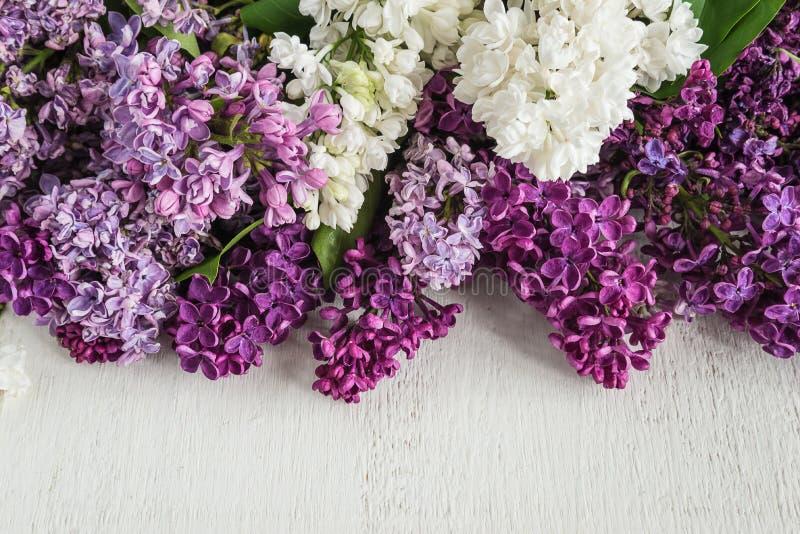 Grupos coloridos luxúrias do lilás imagem de stock