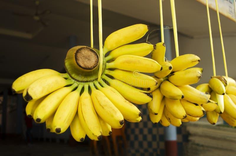 Grupos das bananas imagens de stock royalty free