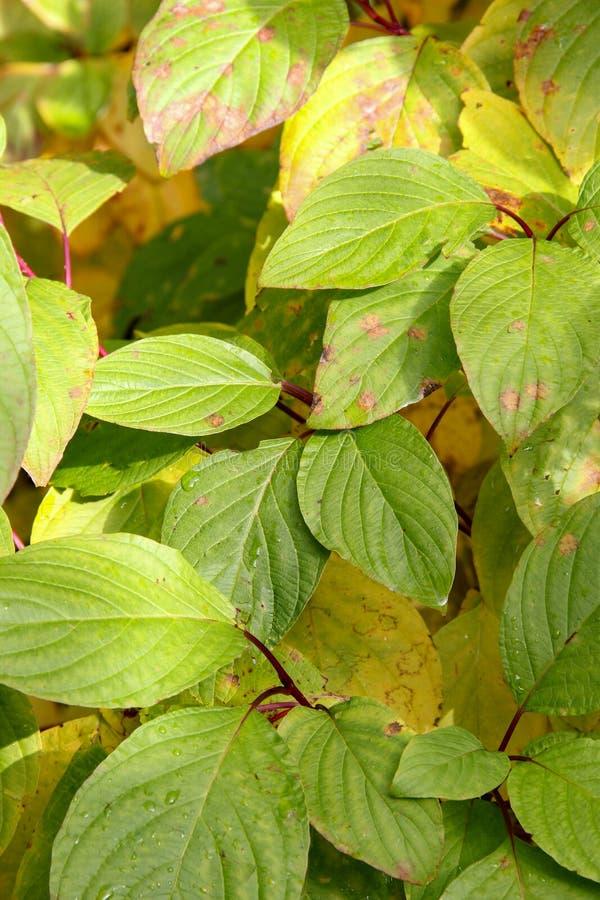 Grupos das folhas imagem de stock