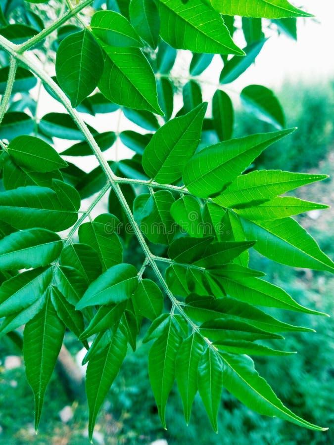 Grupos das folhas verdes imagens de stock