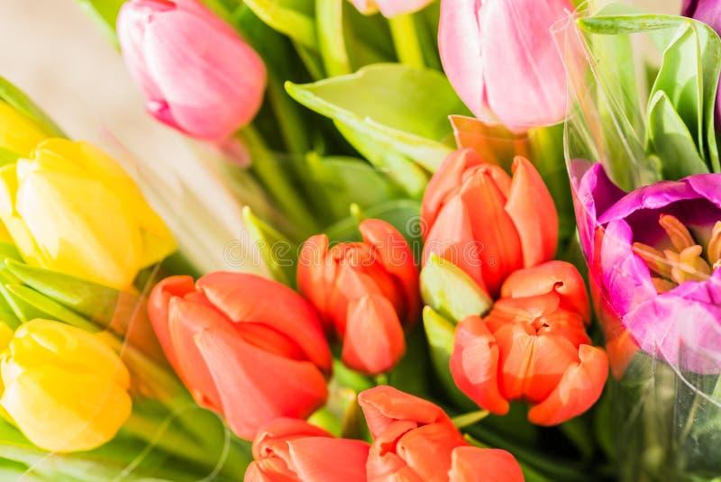 Grupos das tulipas, flores bonitas da mola foto de stock royalty free