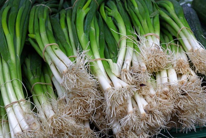 Grupos de cebolas frescas da chalota do verde da mola fotos de stock royalty free
