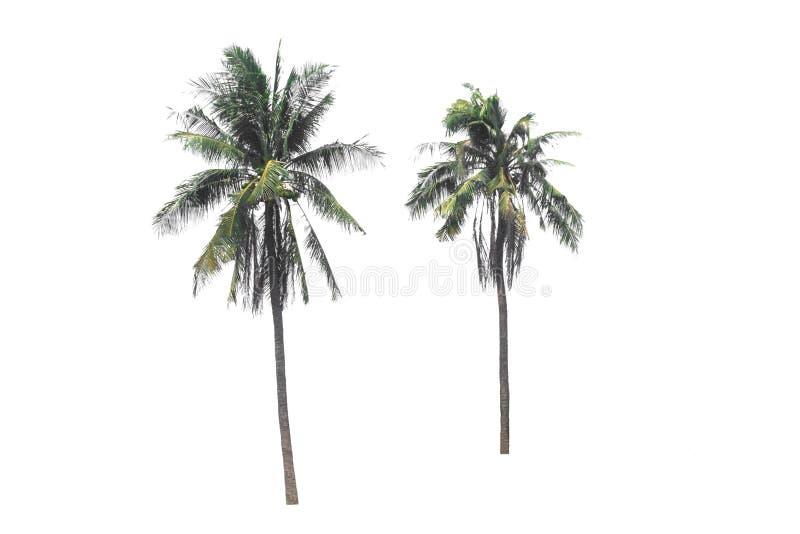 Grupos de cocos sobre fundo branco com caminho de recorte fotografia de stock